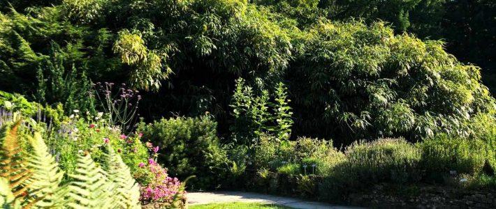 Der naturnahe Garten